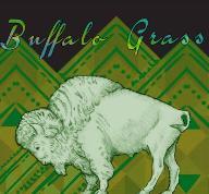 the-buffalo-grass-company